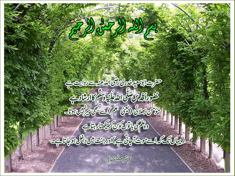 post-349-1230039267.jpg